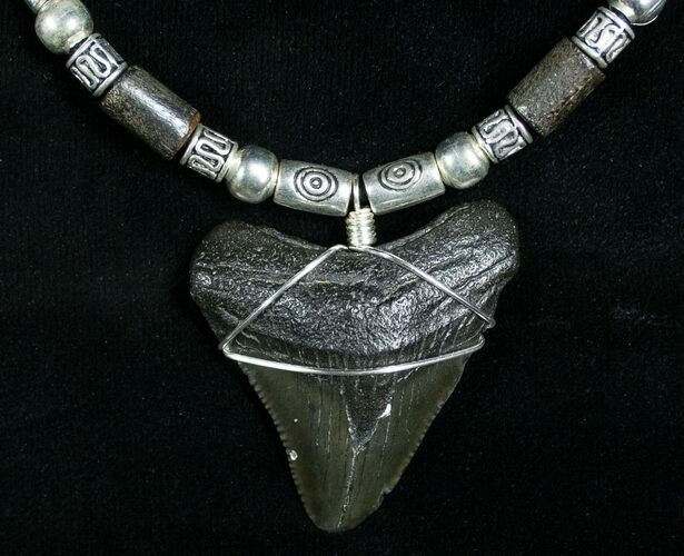 Megalodon Tooth Necklace - Serrated